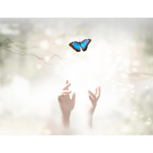 Schmetterling komprimiert